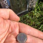 بعض الاكتشافات الرائعة مع بلدي Anfibio